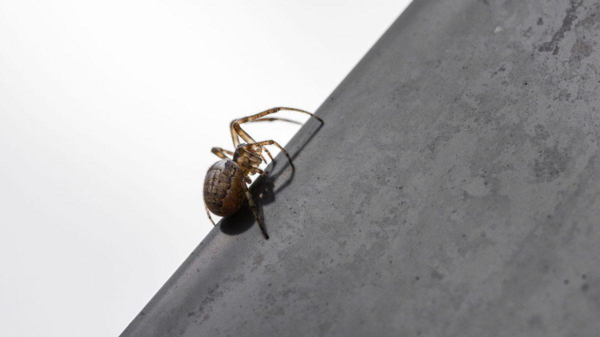 INNtop Spider Slider