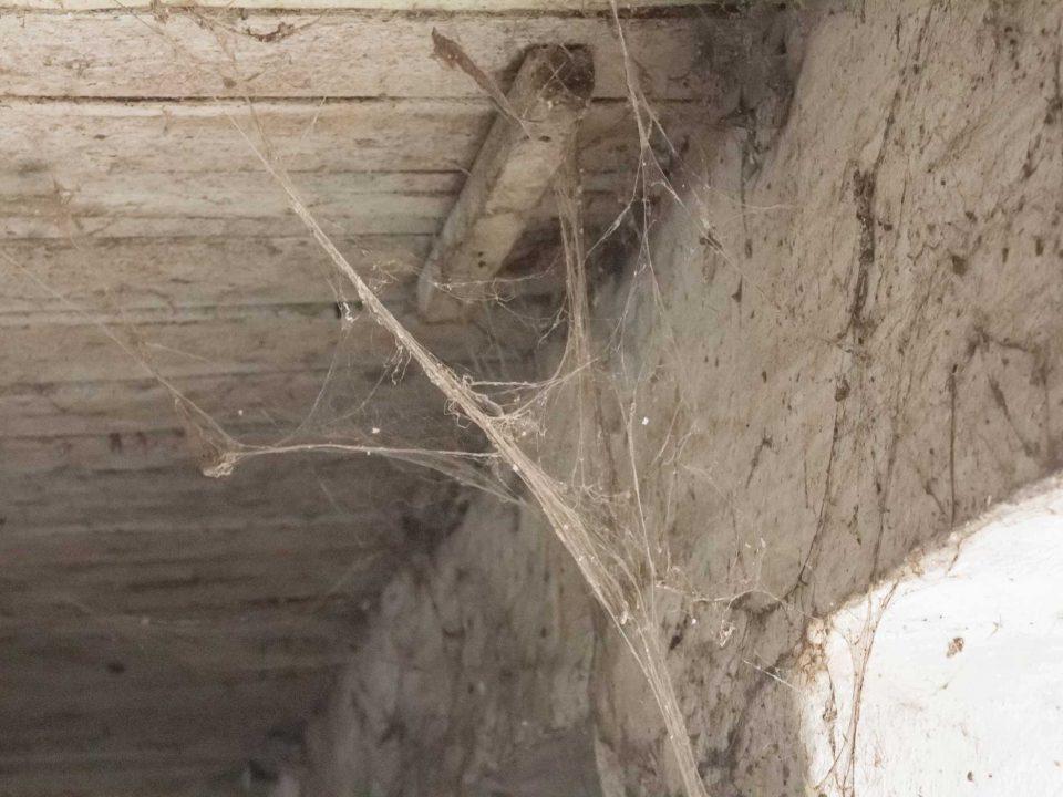 Spinnennetz Fassade